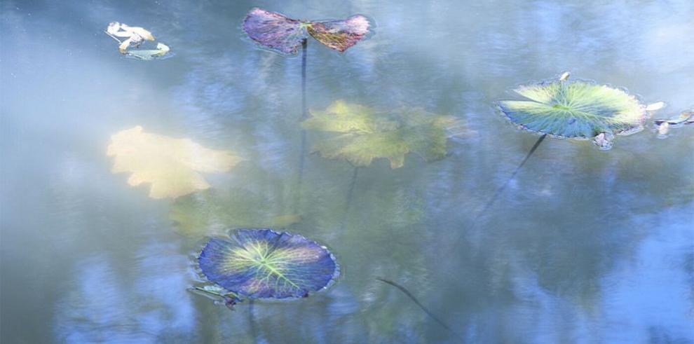 Imágenes que flotan en el lienzo