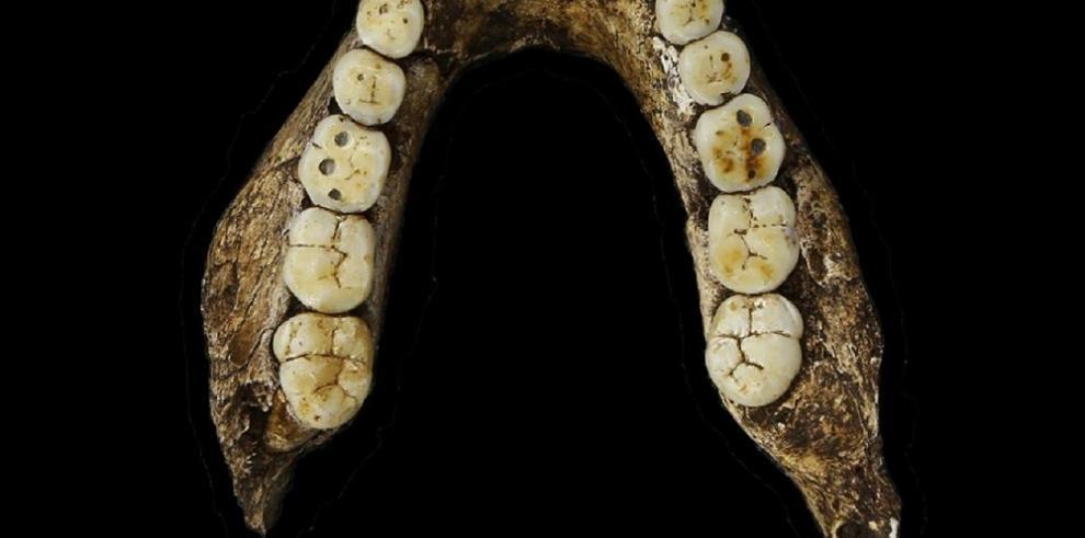 Descubren en Sudáfrica una antigua especie del género humano