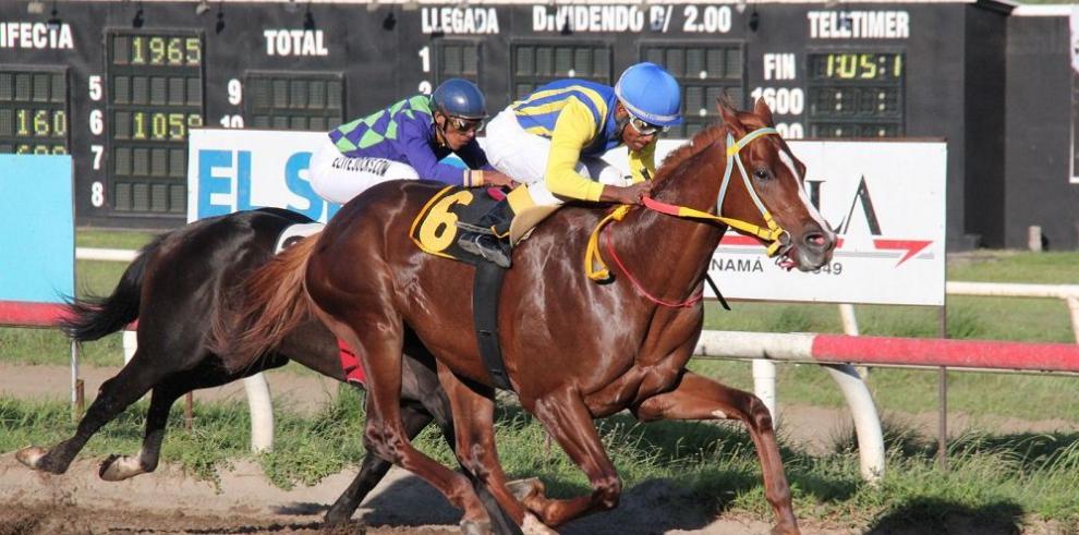 """""""Jap Horse Stall"""", líder entre los propietarios"""