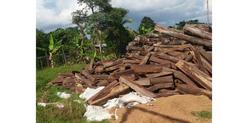 Formulan cargos a implicados en tráfico ilegal de cocobolo
