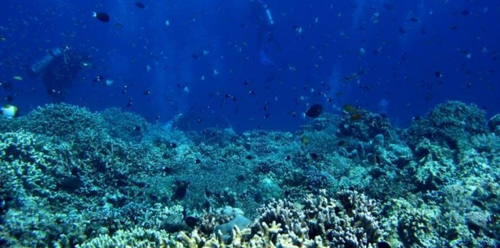 Arrecifes artificiales de neumáticos, un experimento decepcionante