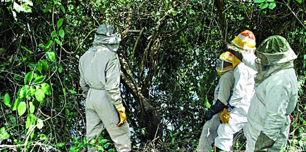 Los bomberos atienden 153 casos de abejas africanas