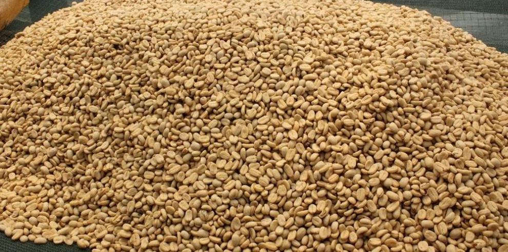 Ngäbes exportan café orgánico a Alemania