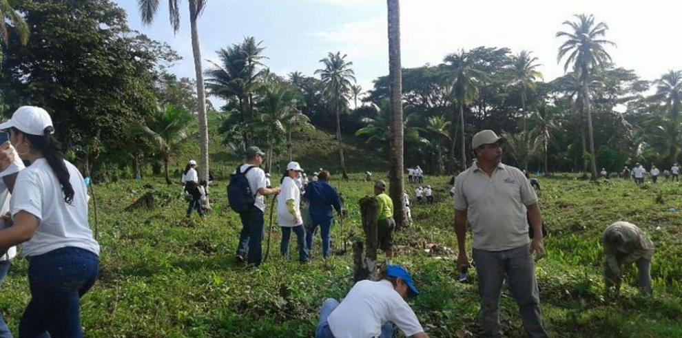 Panamá inicia la siembra del millón de hectáreas en 20 años
