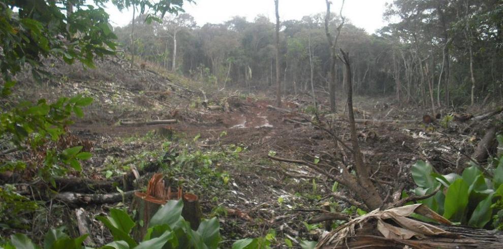Minera Panamá refuerza manejo de los bosques