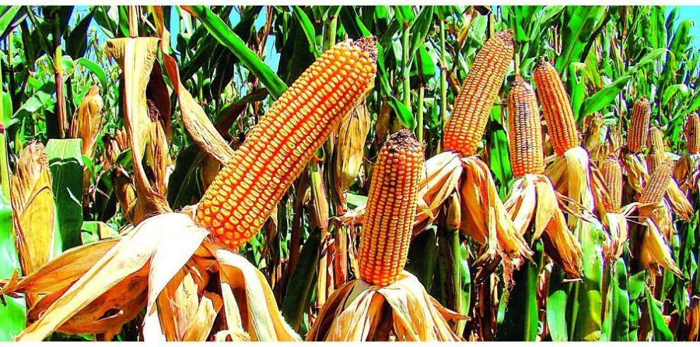 La agricultura sostenible y su aporte al medio ambiente