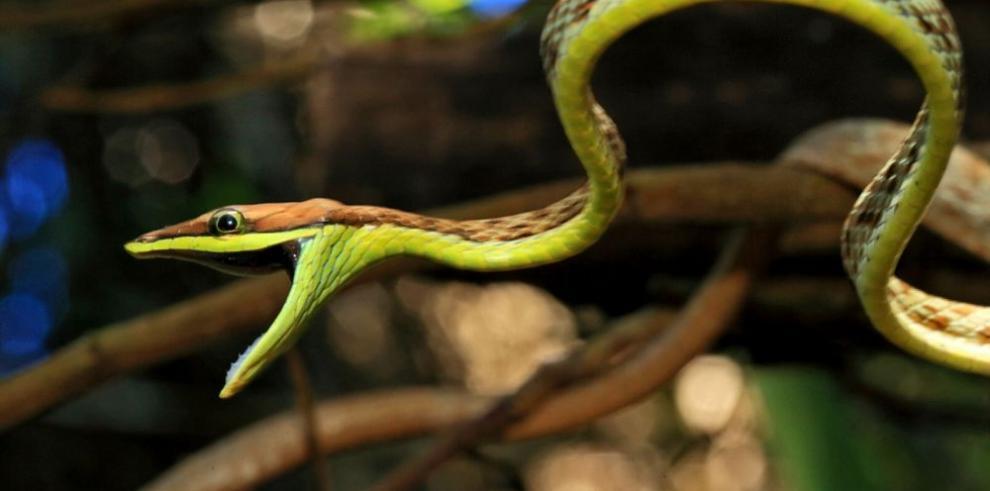 Descubren nuevas especies en Coiba