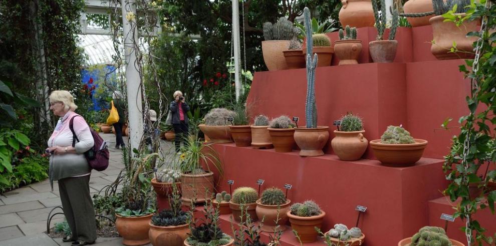 Frida Kahlo y su Casa Azul en el Jardín Botánico de Nueva York