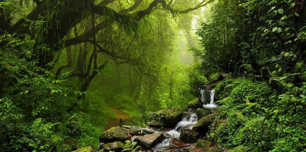 Congreso Mundial de los Bosques