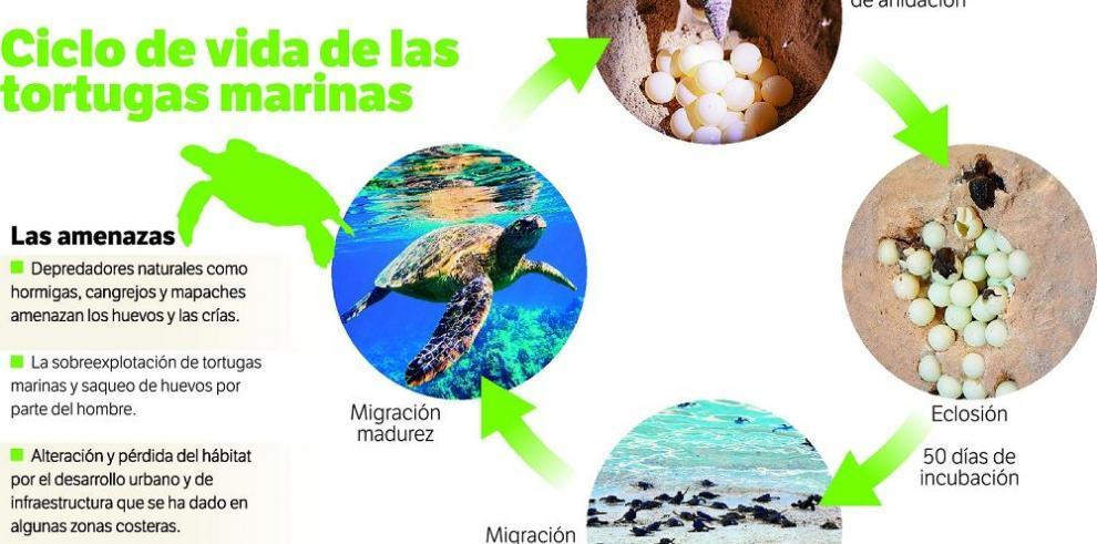 Panamá tendrá un plan de protección de tortugas