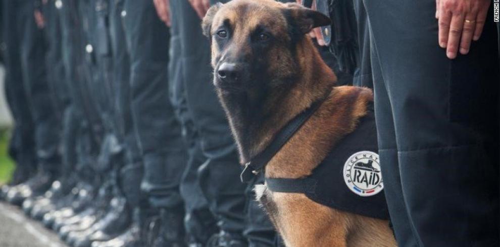 Una perrita policía abatida por los operativos de Saint-Denis en Francia