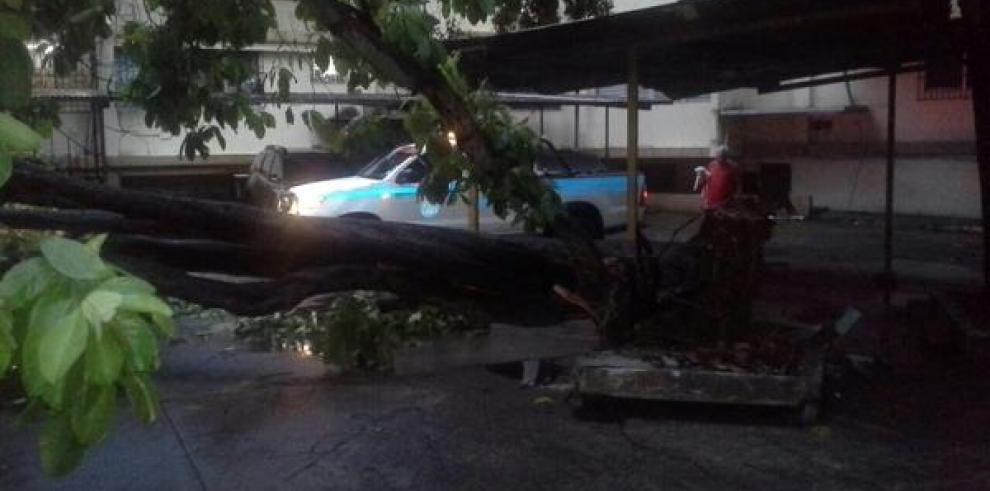 Lluvias y fuertes vientos causan estragos en la ciudad capital