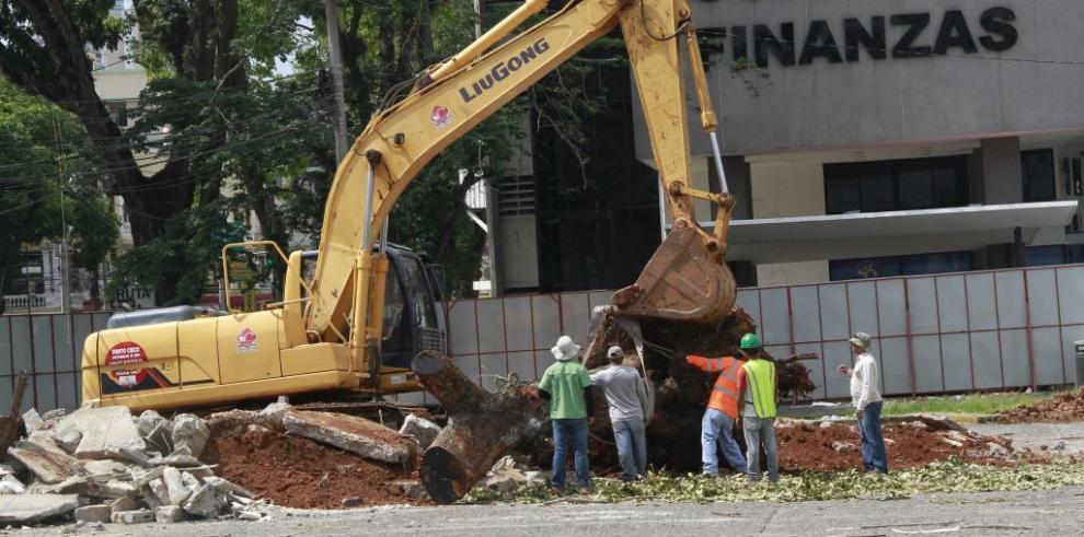 Trasplantan árboles para construcción de estacionamientos soterrados