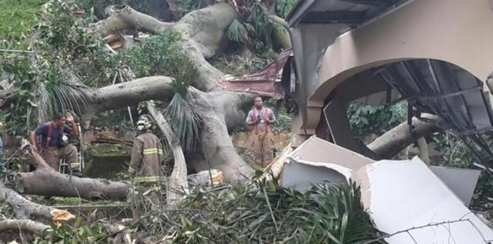 Árbol destruye una residencia en Balboa