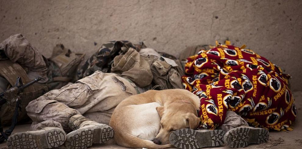 Un niño abandonado de dos años fue amamantado por una perra en Chile