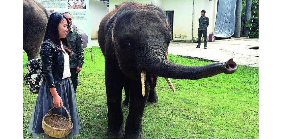 Reserva ofrece protección a elefantes