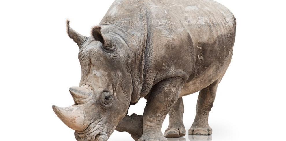 Kenia inauguró laboratorio para luchar contra la caza