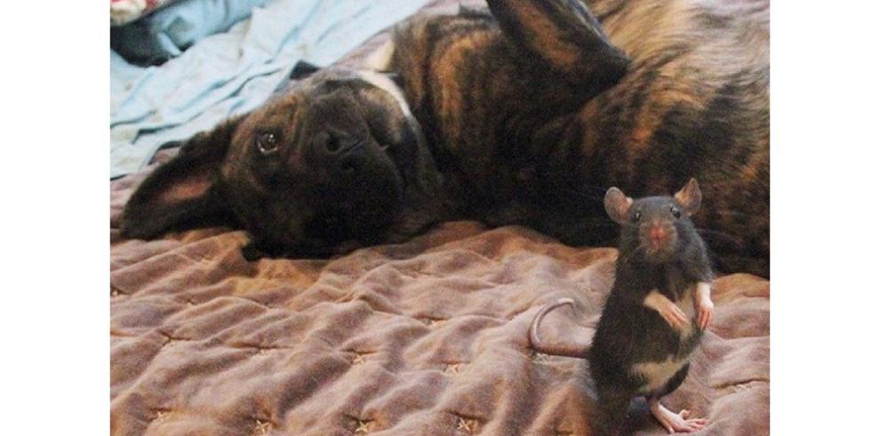 Una rata y un perro se han convertido en los mejores amigos