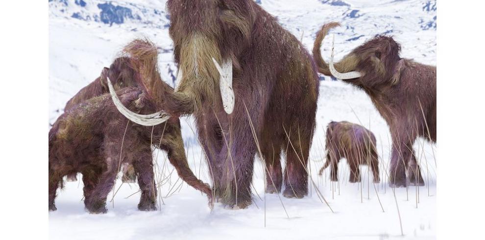 El cambio climático causó la desaparición de los mamuts