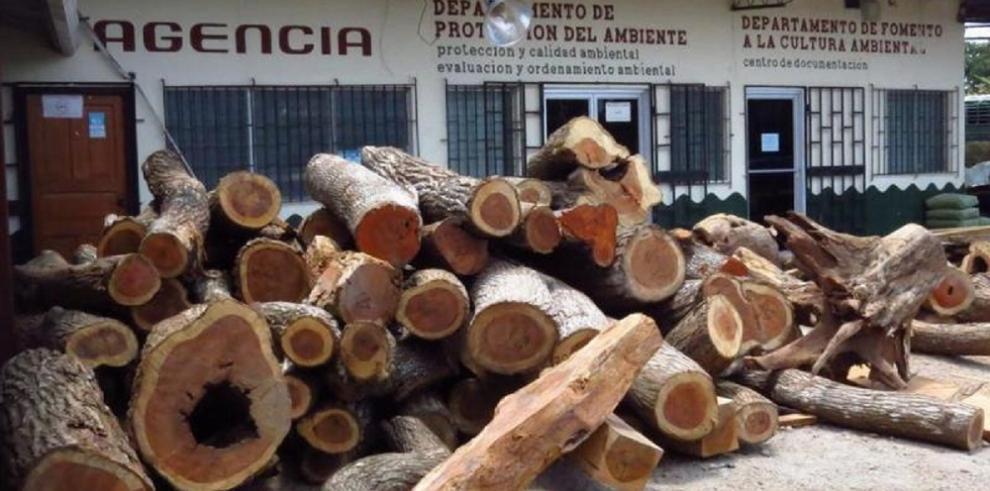 Autoridades trasladarán madera decomisada hacia la Joya