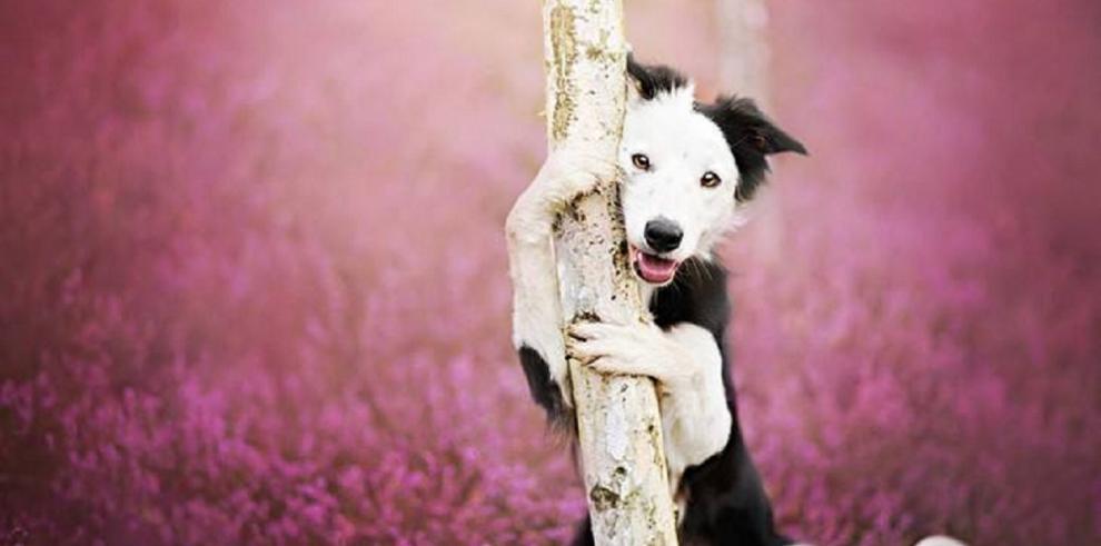Perros modelan para sesión de fotos