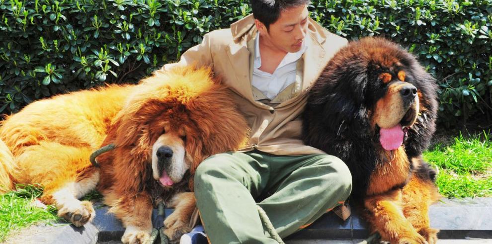 Compran un perro por 2 millones de dólares