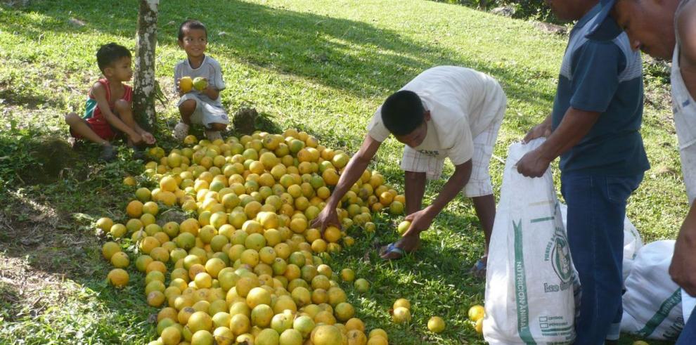 Alza desbalanceada en precios del agro