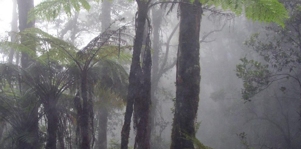 Scotiabank apoya Bosque de Niebla