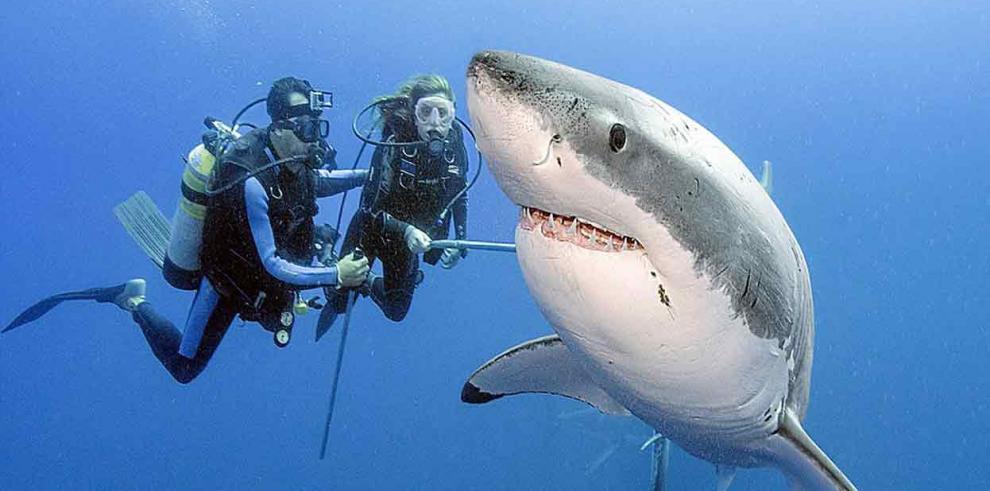 Niño de 12 años pesca tiburón de 2,5 metros en EEUU