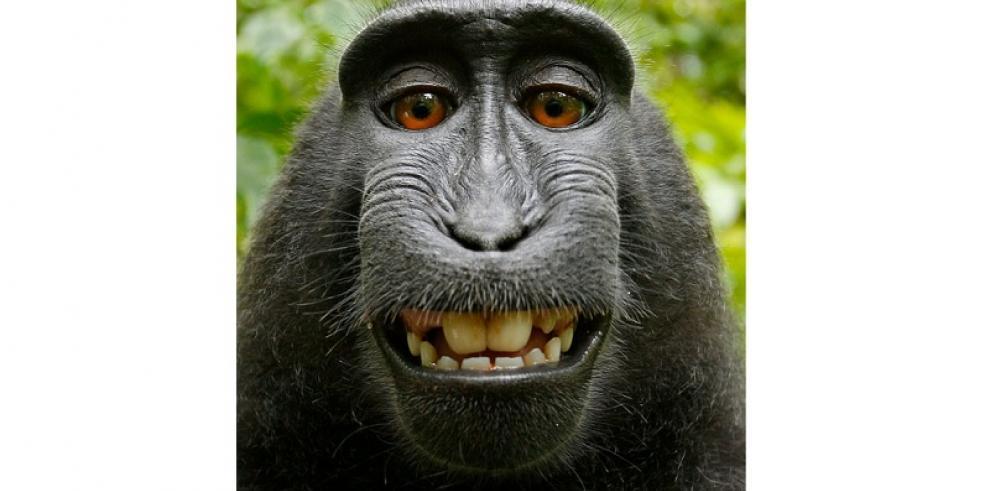 Selfie de un mono causa batalla legal contra Wikipedia