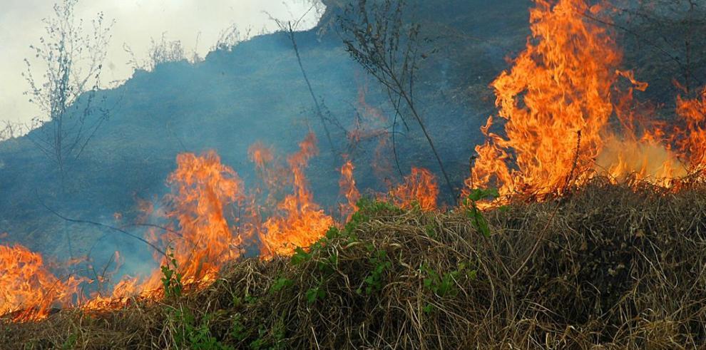 El clima y el hombre potencian los incendios en los bosques