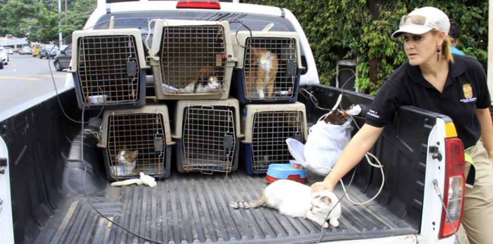 Rescatan 36 gatos víctimas de maltrato animal