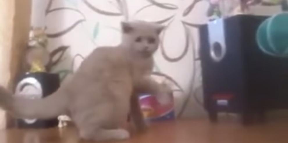 Vídeo: Gatito vs ondas sonoras