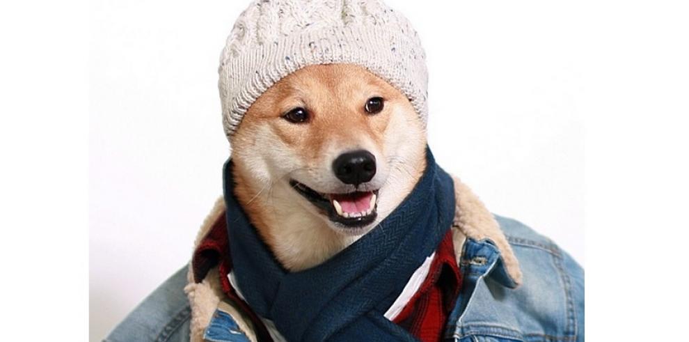 El perro que modela ropa masculina