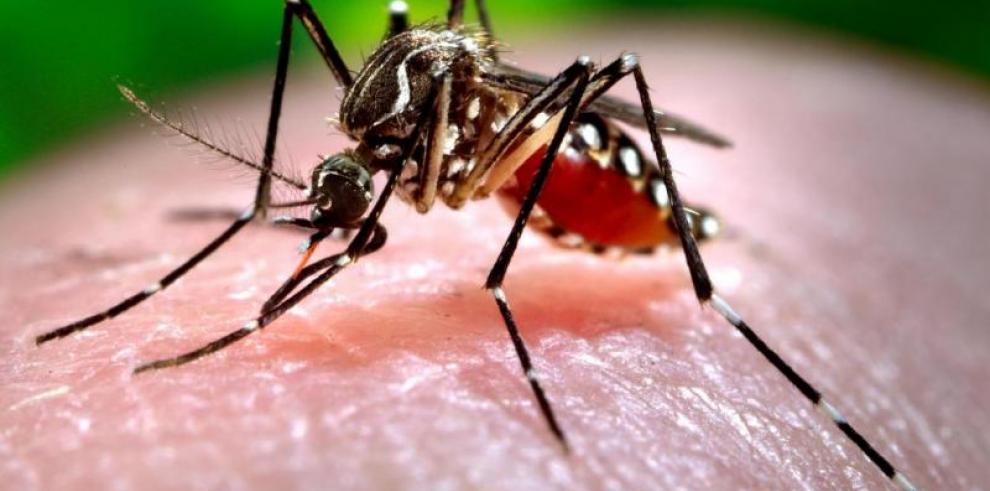 Reportan posible caso de chikungunya en Coclé