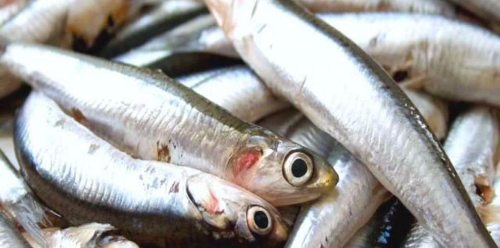 Suspenden pesca de anchovetas en Perú