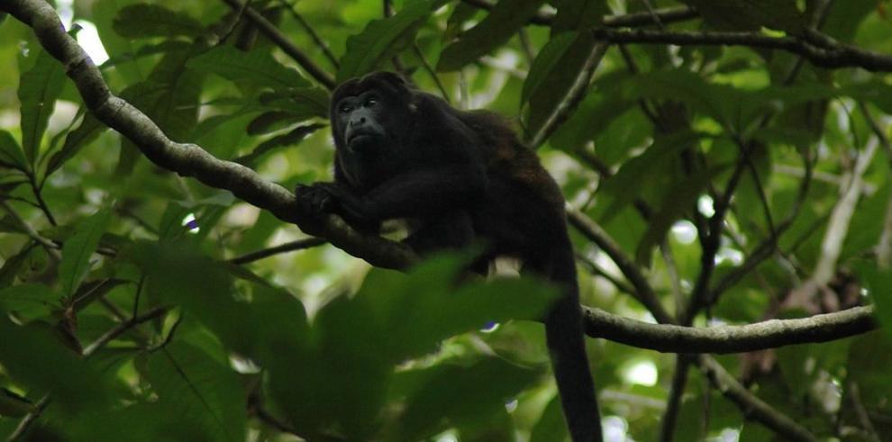 Senderismo, una práctica aún con deficiencias en Panamá
