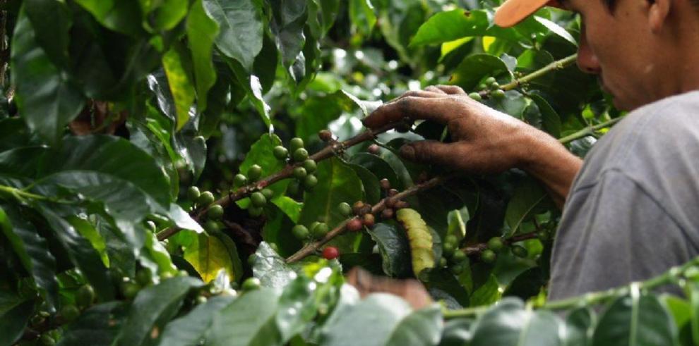 Caen 3.24% exportaciones de café