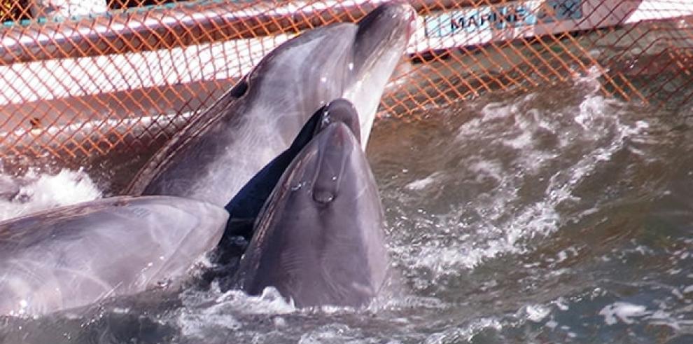 Delfines son asesinados en Japón