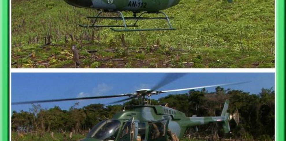 SENAN destruyó plantones de marihuana en isla San Miguel