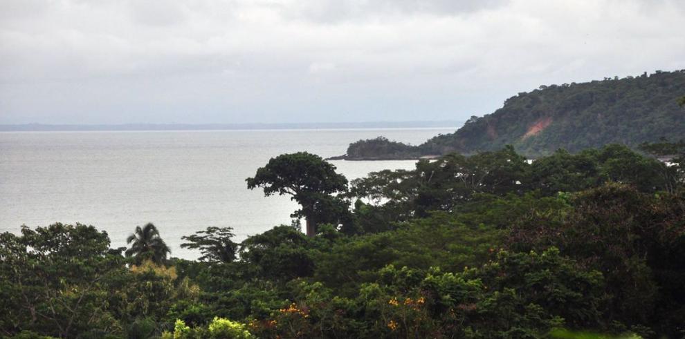 Promueven monitoreo satelital de bosques