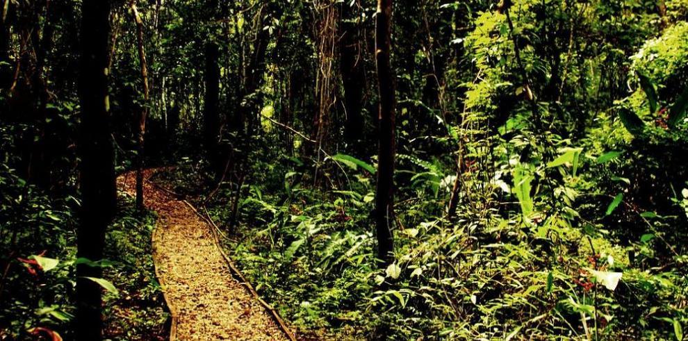 Patógenos limitan distribución de los árboles en zonas secas