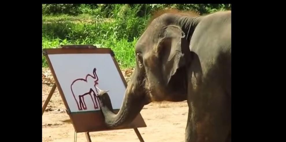Suda, el elefante que pinta