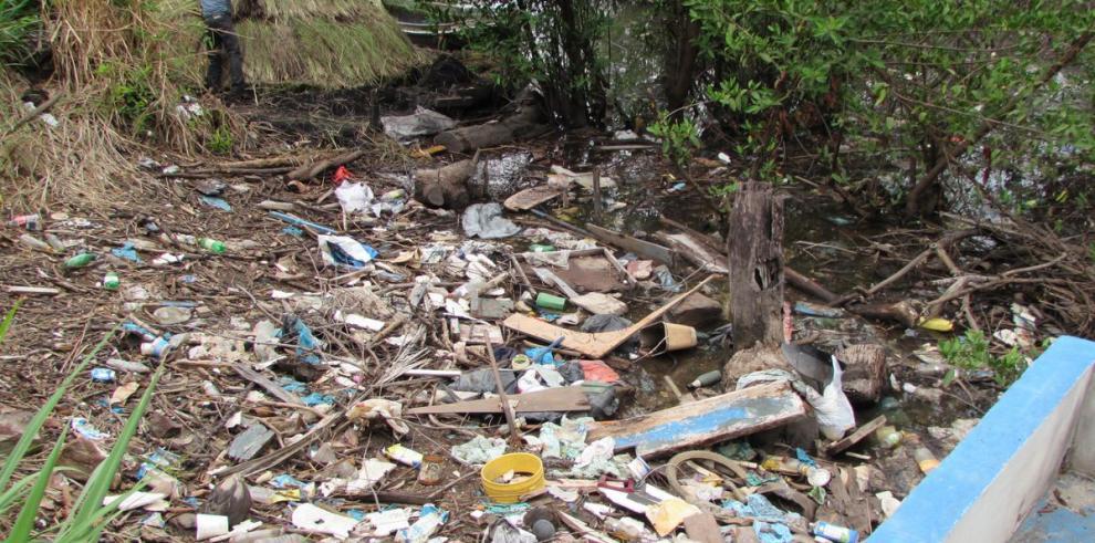 Manglar receptor de basura en El Espavé