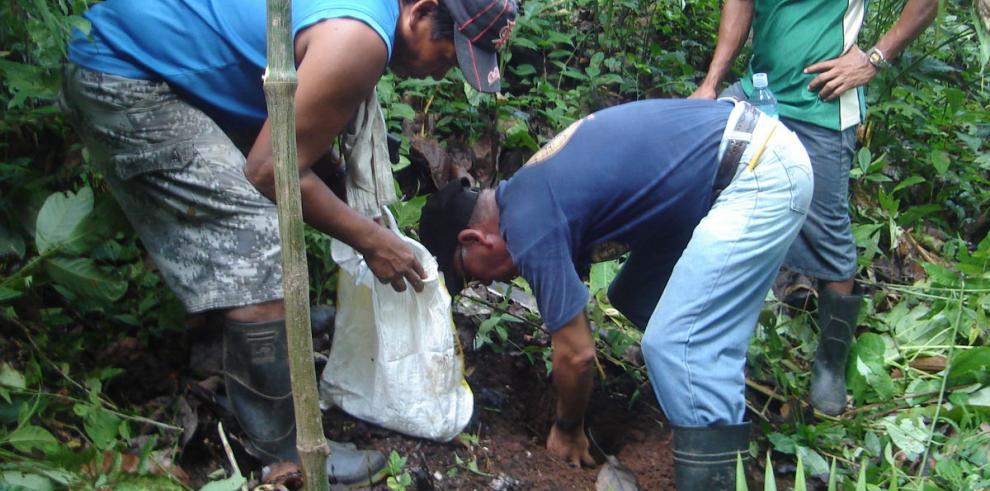 La historia de los cocos de la Reserva de Punta Patiño
