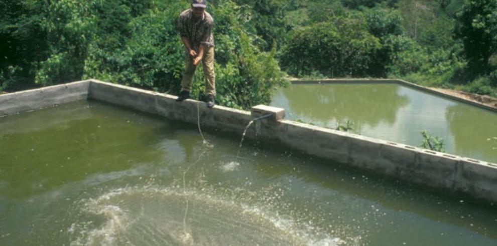 Panamá se une a plan contra nueva enfermedad del camarón