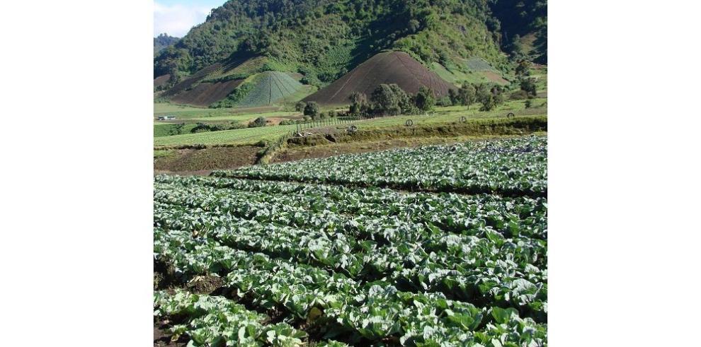 Mejoran abono para reducir la contaminación