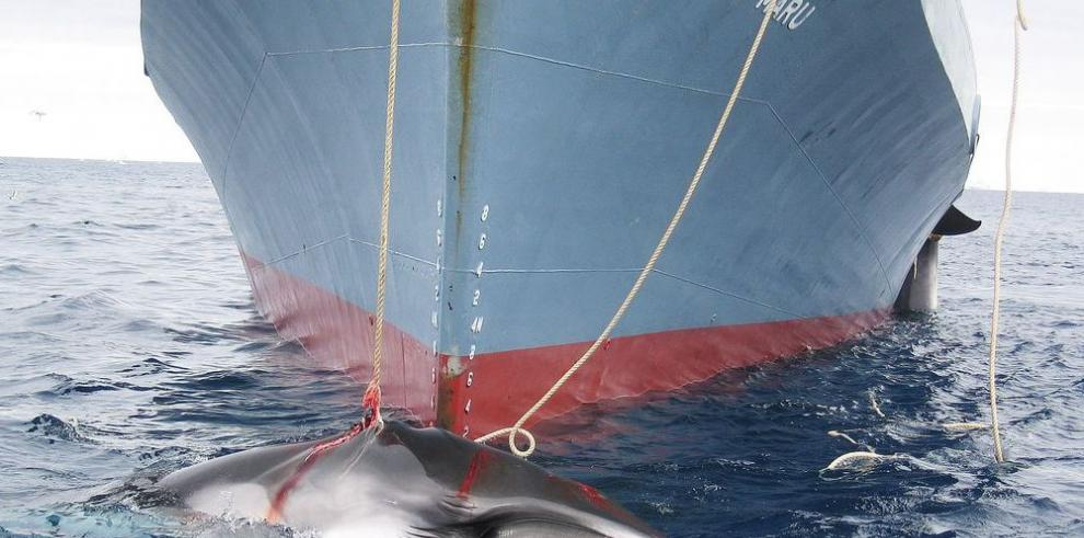 Futuro de cetáceos en manos de la CBI