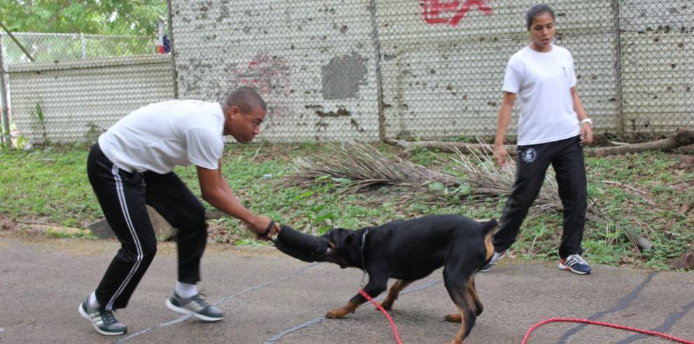 Los tres perros que cuidarán en la Universidad de Panamá
