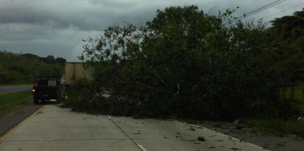 Fuertes vientos generan caída de árboles en varios puntos del país